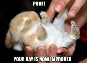 Silly Rabbit Meme - funny rabbit memes one lop too many