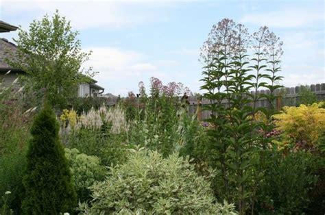 Garten Einheimische Pflanzen by Einheimische Pflanzen F 252 R Ihren Garten