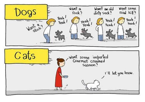 difference between cats and dogs the difference between dogs and cats begging for food laughspark