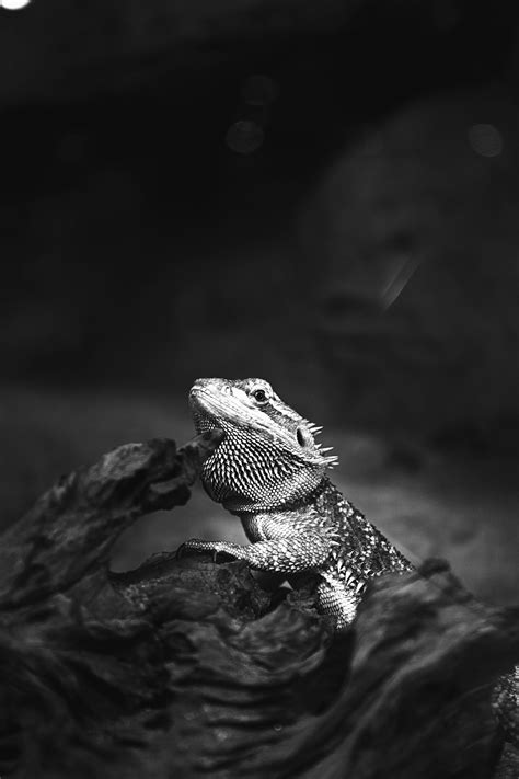 Free picture: lizard, reptile, wood, animal