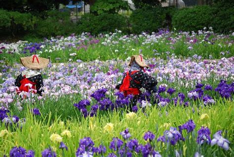 Yokosuka City Iris Flower Garden Japan Top Tips Before Flower Garden City