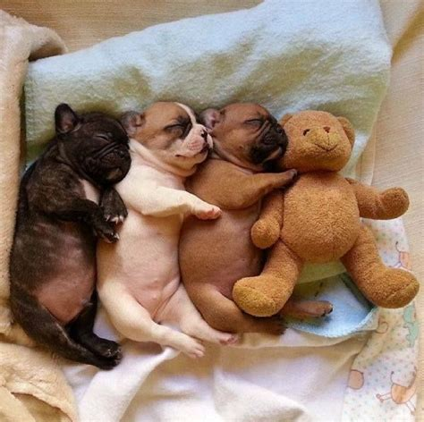 snuggle puppies snuggle puppies pictures photos and images for and