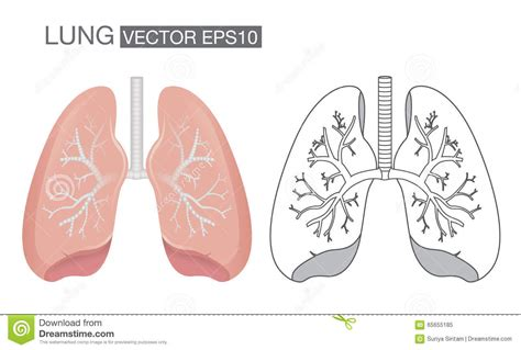 what color is lung cancer the gray lung transform into ashes vector illustration