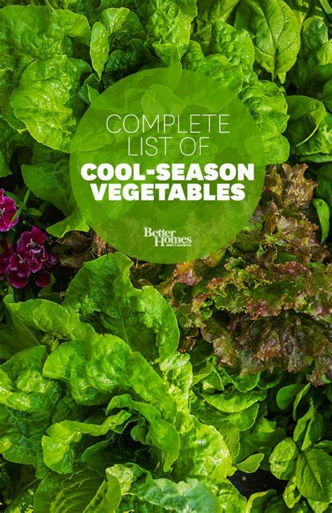 33 Best Images About Fall And Winter Gardening On Cold Weather Vegetable Gardening