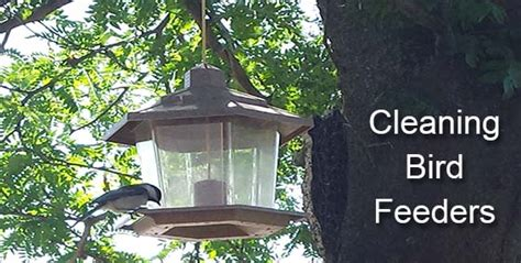 how to clean bird feeders landscape edging blog