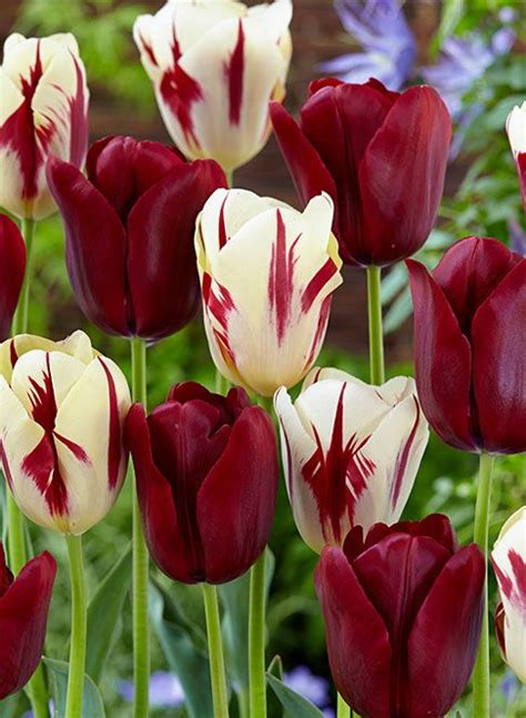 Mukena Bunga Tulip Green 17 best images about one million tulips on tulips and the netherlands