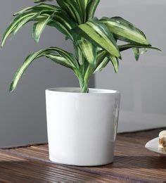 flower potsplanters  buy garden pots  plants