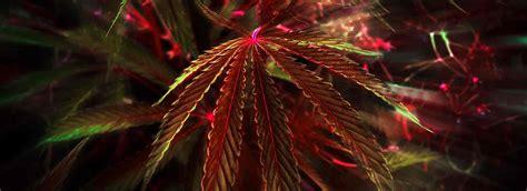 marijuana colors why does change colors massroots