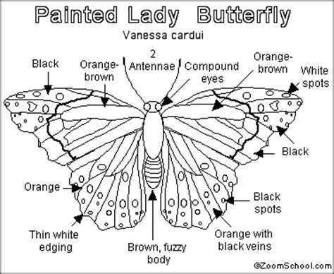 coloring page of painted lady butterfly painted lady butterfly