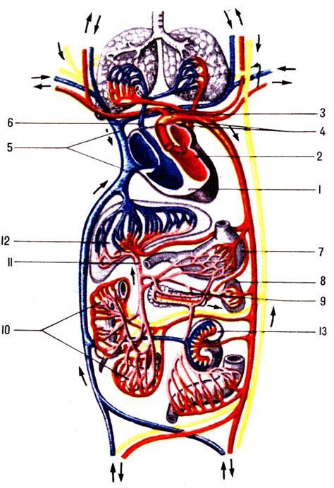 патологическая анатомия учебник скачать