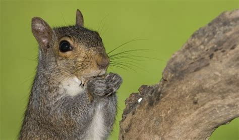 how to keep squirrels out of your garden garden