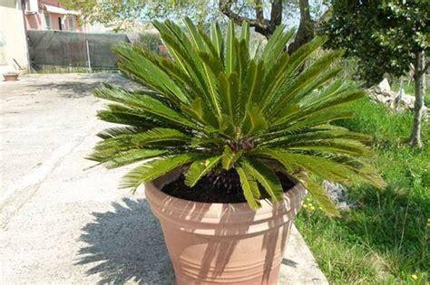 piante in come scegliere le fioriere da giardino scelta dei vasi