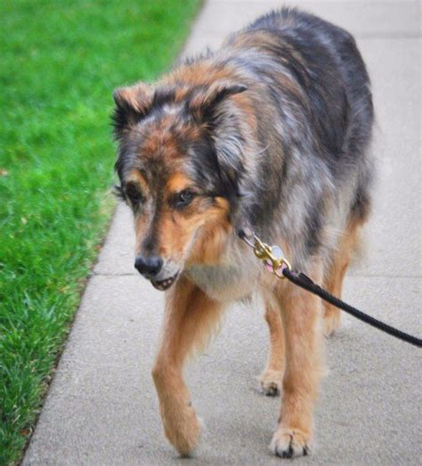 shivering and lethargic causes of shivering and lethargy in dogs and what to do pethelpful