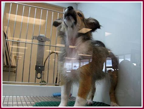 the wisconsin puppy mill project where do petland puppies