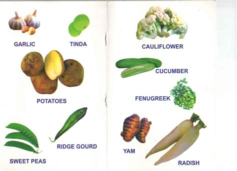 vegetables names vegetable names in and telugu