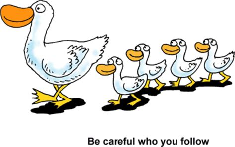 Image: Ducks in a Row   Be careful who you follow