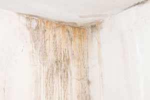 Wann Ist Eine Wand Feucht by Schimmel Entfernen Schimmelpilz Schnell Beseitigen So Geht 180 S