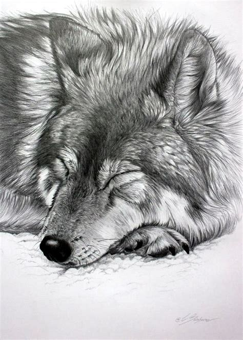 Animal Pencil 40 realistic animal pencil drawings animal pencil