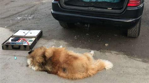 Hund Im Auto Hitze by Weinheim Tierrettung Erstattet Anzeige Hund Tot Im Auto