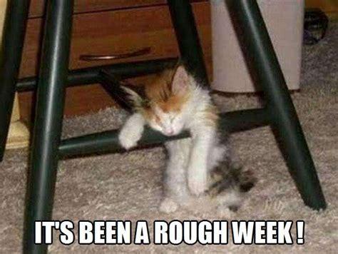 rough week kittyworks