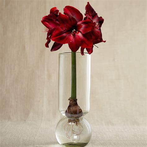Bulbs In Vases by Glass Forcing Vase Make Flower Bulbs Bloom In Any Season