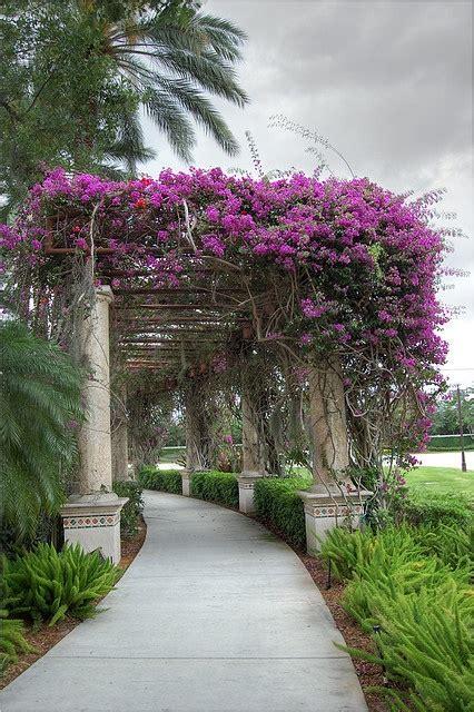 bouganville fiore bouganville il fiore dell estate in the mood for design