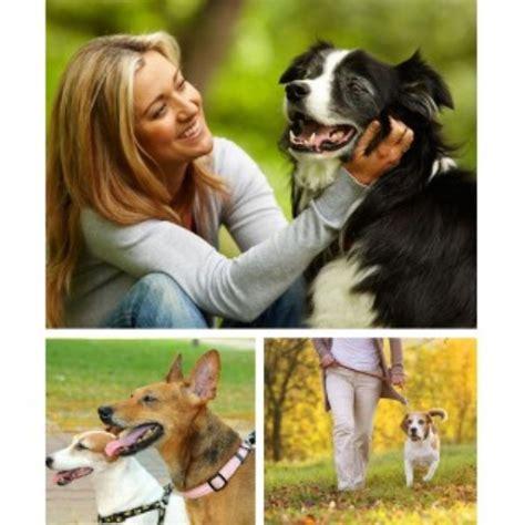 puppy raleigh nc 919 raleigh carolina 27615