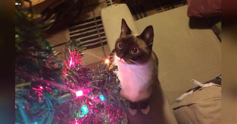 how to keep cats out of the christmas tree how to keep your cat out of the tree for their own safety