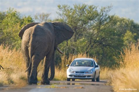 african safari car how to take your first african wildlife safari for only