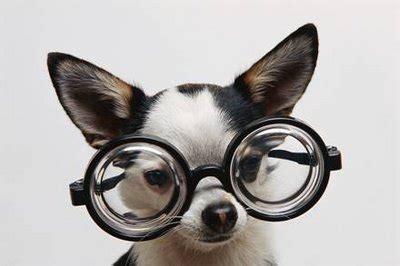 visi 243 n en animales la vision de los perros