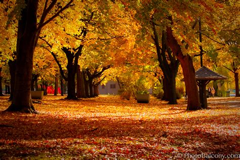 in fall open thread summer is over on to fall beyond black white