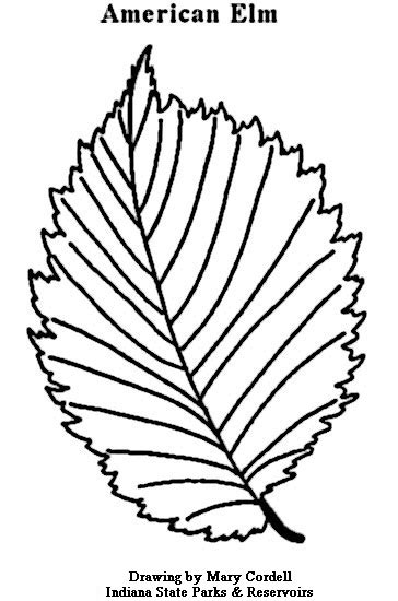 elm leaf coloring page dnr coloring pages plants