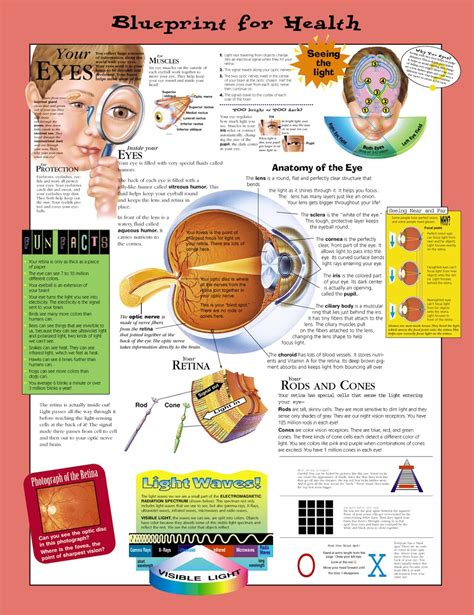 Blueprint For Health Your Eyes Anatomical Chart Paper