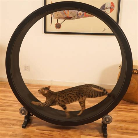 exercise wheel one fast cat cat exercise wheel the green