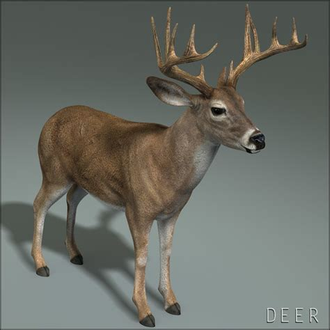 animated deer deer animation 3d model