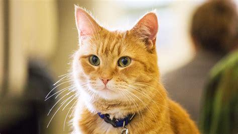 Cat Instagram a street cat named bob review