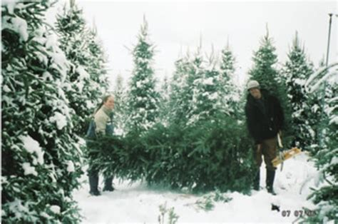 christmas tree farm near me appleron wi 10 things everyone in northern california should do before