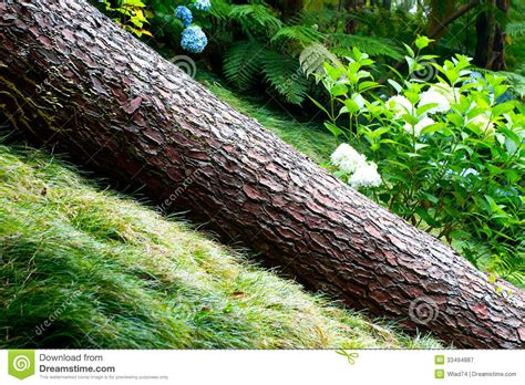 fallen tree in the garden royalty free stock photography image 33494887