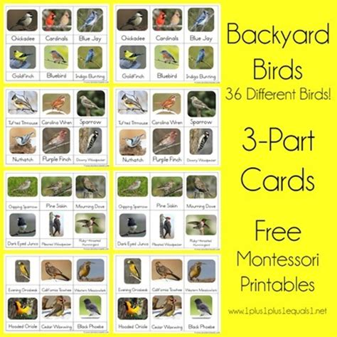 printable montessori calendar backyard birds montessori printables nomenclature 1 1 1 1
