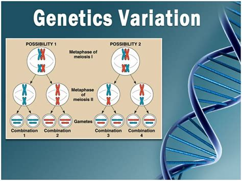 templates powerpoint genetics 22 best images about other medical templates on pinterest