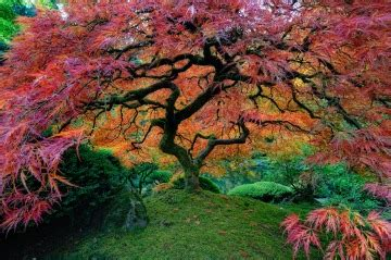 maple tree symbolism tree symbolism and meanings symbols interpretations