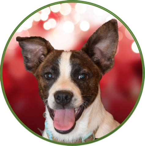 A To From The Adoptable Pets Photo Pool by 17 Best Images About Dolly Goodpuppy Adopted Dogs On