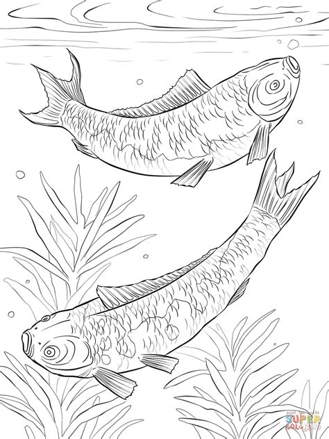 detailed fish coloring pages koi carp detailed coloring page coloring pages