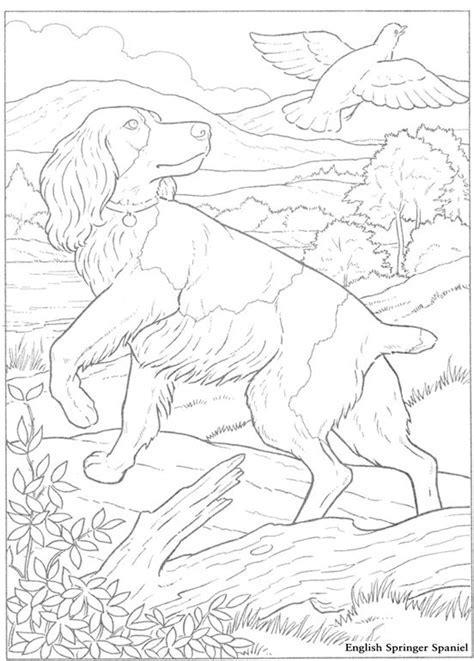 Springer Spaniel Coloring Page Dog Breeds Picture