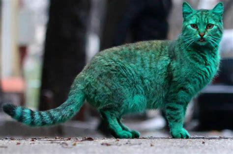varna cat  green       fear