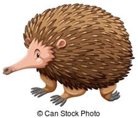 echidna clipart echidna clipart and stock illustrations 155 echidna