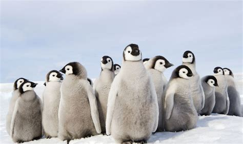 a happy death penguin b00gedd40k oscar winning actress kate winslet narrates bbc documentary the snow life life style