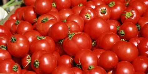 a fruit or vegetable supreme court tomato is vegetable business insider