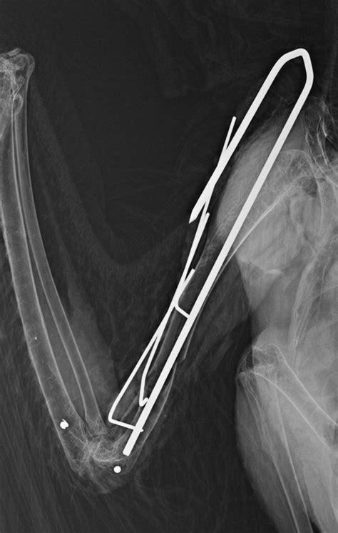 A Broken Wing how survivable are broken wings for birds quora