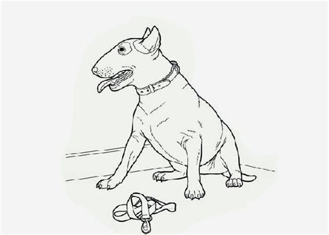 pitbull coloring pages pitbull coloring page free coloring pages and coloring